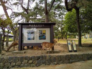 奈良国立博物館近郊