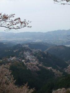 吉野桜奥千本